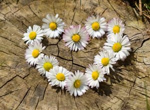 Daisy Heart Wedding